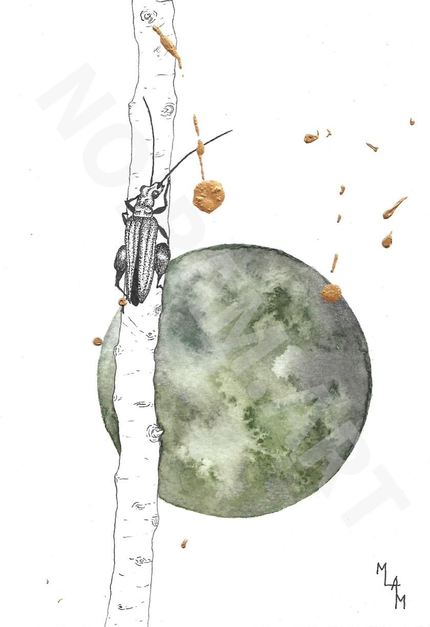 mlam marion-lorraine poncet noiram insecte planète aquarelle or nicodemus