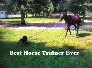 Best horse trainer ever