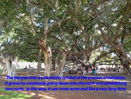 Banyon tree as metaphor for initiation