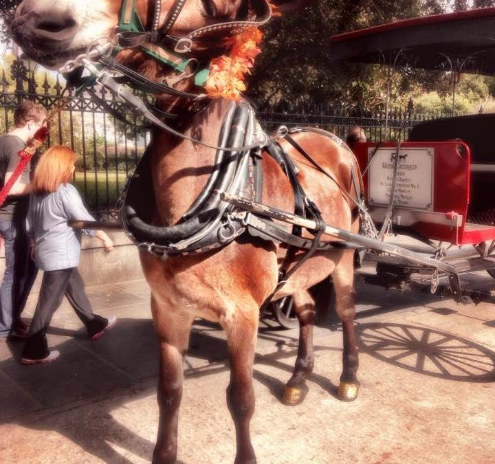 Buggy Rides: Five Reasons you should take a tour!