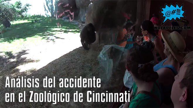 analisis-accidente-zoologico-cincinnati-nolapeles.com
