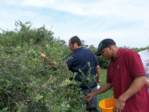 """""""Pick, pick, Pick away boys!!  Bring home some blueberries!!""""- Amy    This week we took a little trip to the Mason's Beach fruit farm!!"""