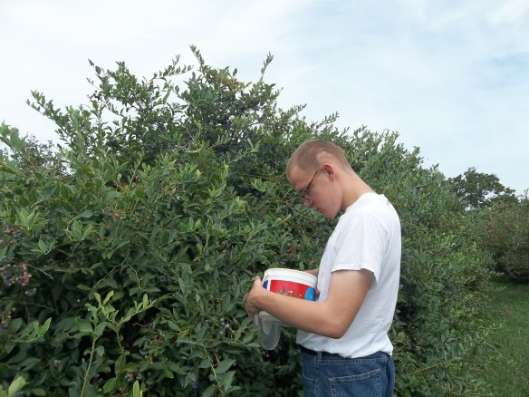 """""""Brandon wishing more berries will appear in his bucket ;) Blueberrie picking is hard work! - Amy"""