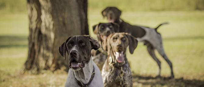 NO_LIMITS_KENNELS_2017_7_27 (116 of 215)