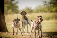 NO_LIMITS_KENNELS_2017_7_27 (119 of 215)