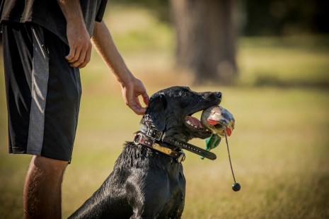 NO_LIMITS_KENNELS_2017_7_27 (142 of 215)