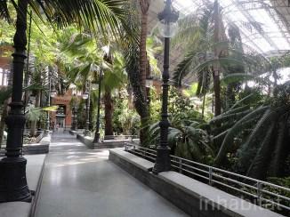 Atocha-Station-Tropical-Garden1