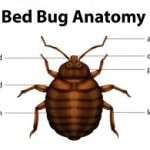 How to Avoid Bed Bugs (Preventing Bed Bugs)