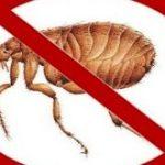 How to Kill Fleas?