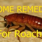 Home Remedies for Cockroaches Removal From Home