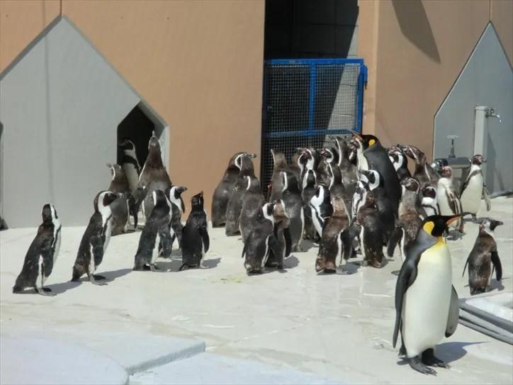 志摩マリンランドのペンギン