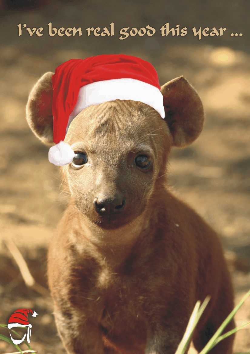 Animal Christmas Card Nomad Africa Adventure Tours