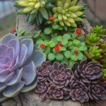 How To Care For And Propagate Succulent Plants Nomadan Org