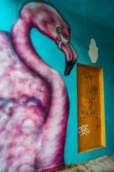 Flamingo mural in Reykjavík, Iceland