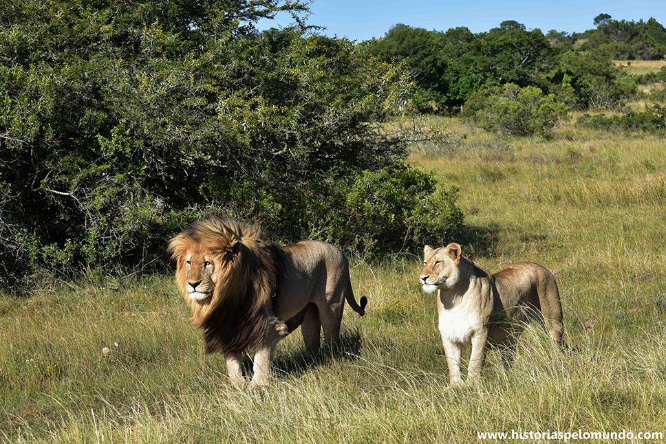 01 Safari em pequenas reservas