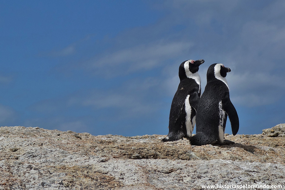 04 Pinguins na Boulders Beach em Simons Town