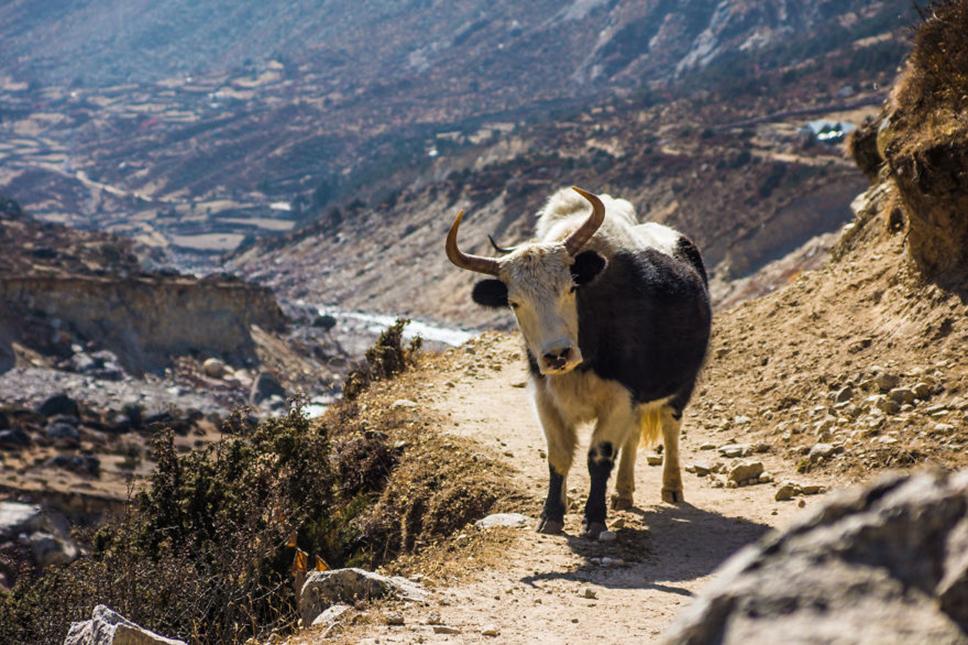https://i2.wp.com/nomadesdigitais.com/wp-content/uploads/2016/01/Nepal15.jpg