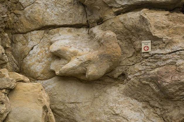 pegada-dinossauros4