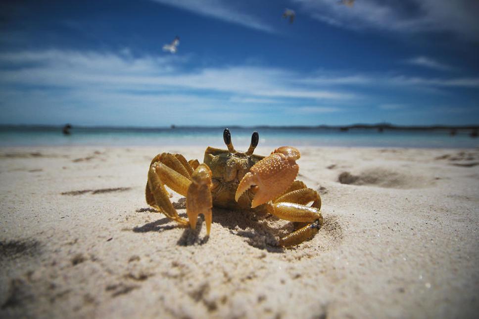Mug-Shot-Crab-573354426c334__880