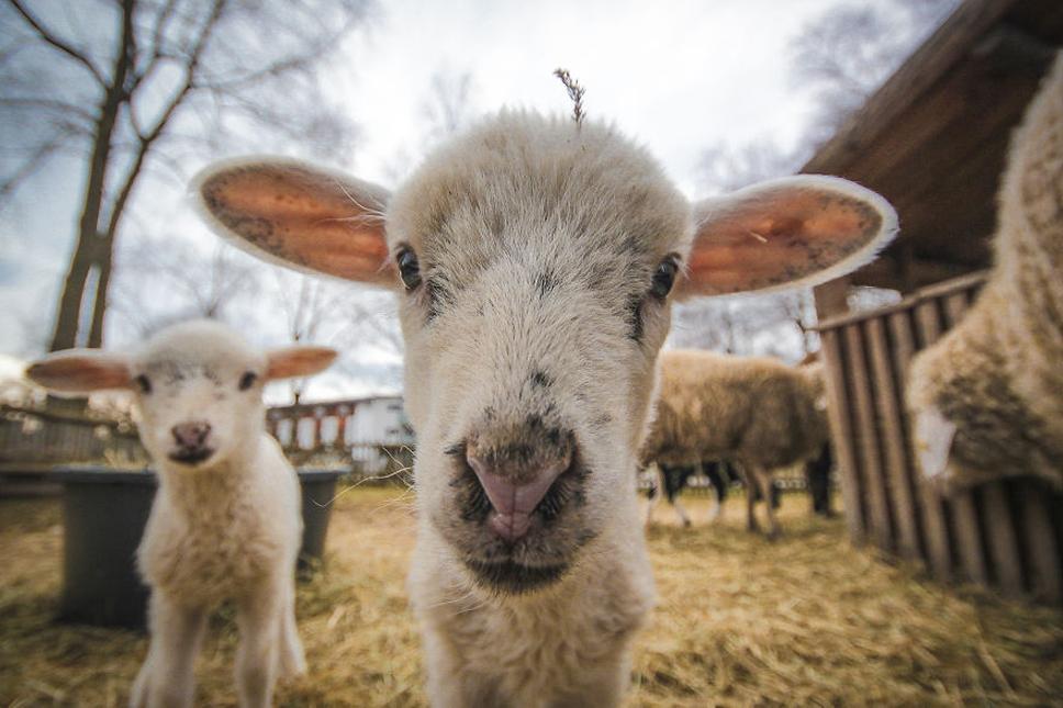 We-Photographed-Funny-Animal-Mug-Shots-All-Over-the-World-573356f4ec237__880