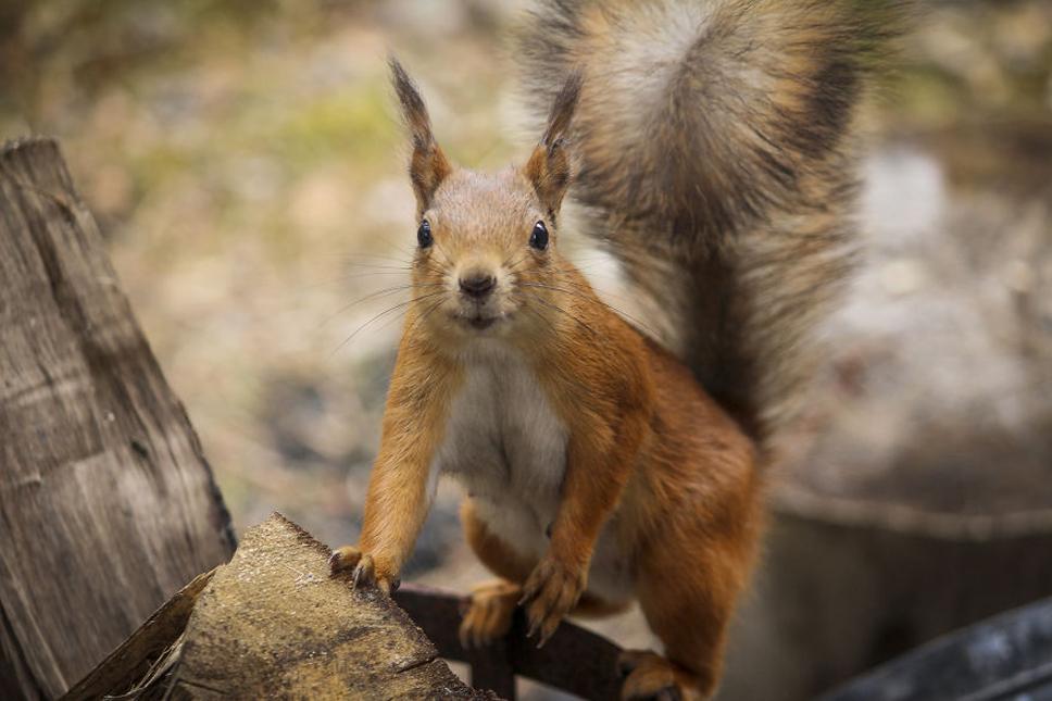 We-Photographed-Funny-Animal-Mug-Shots-All-Over-the-World-5733579f8cd4e__880