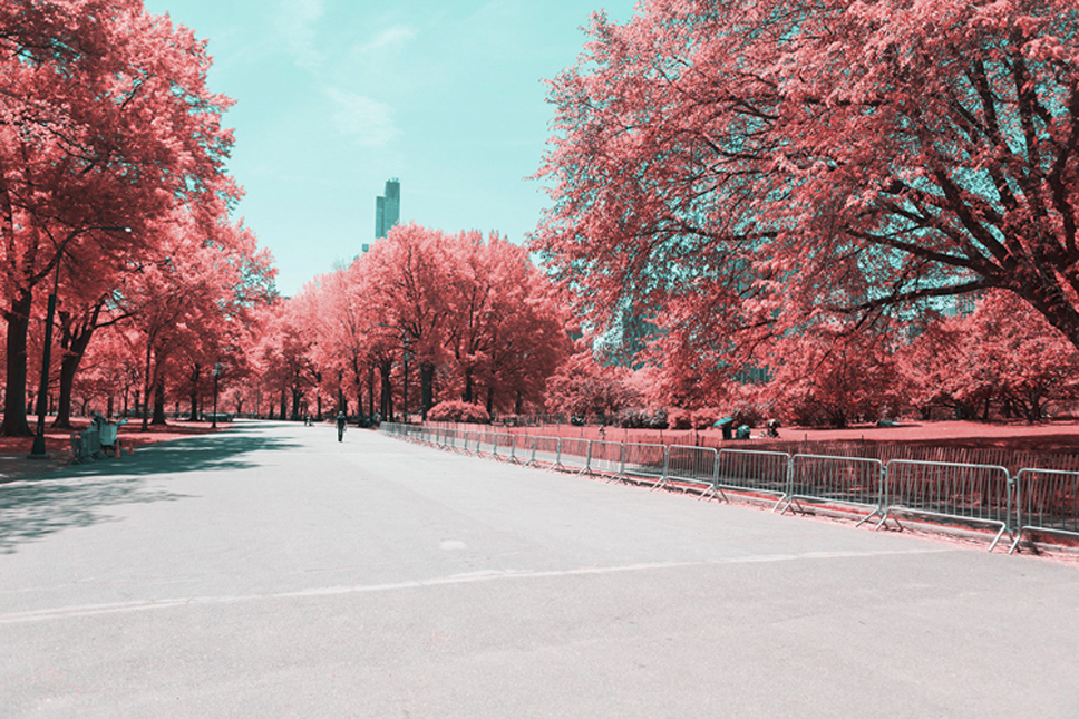 8_Central-Park-Infrared