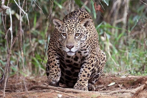 Pantanal 8