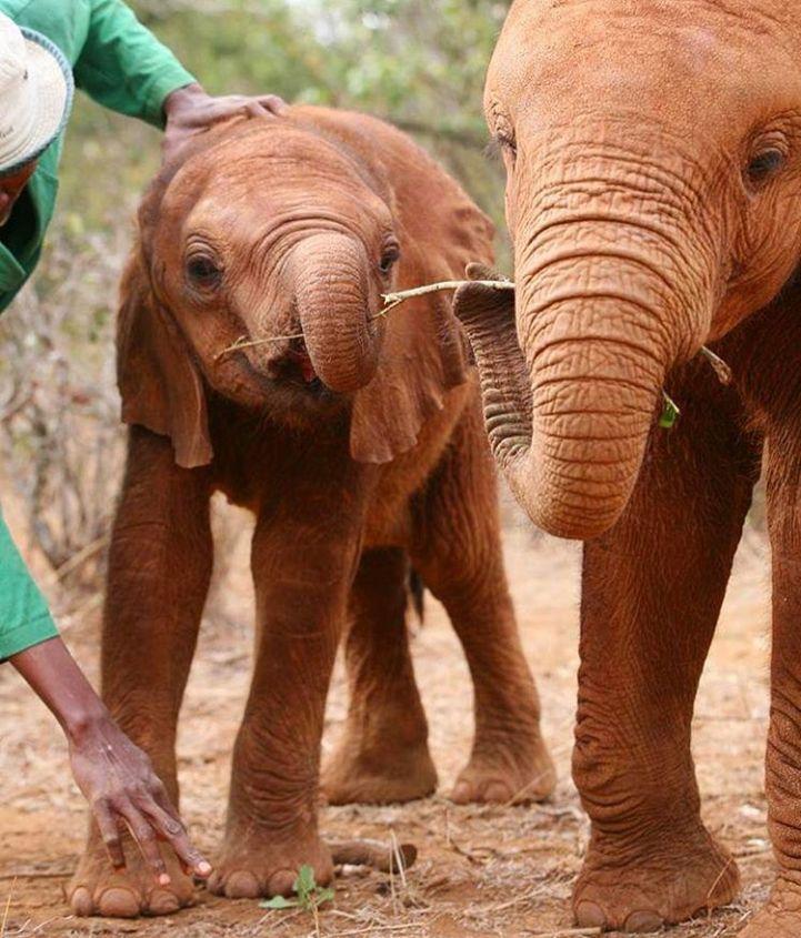 elefante2