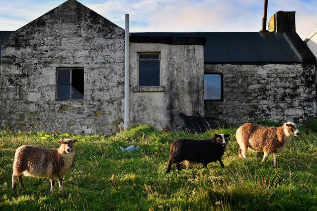 FOULA, SCOTLAND - SEPTEMBER 29: Sheep graze beside an old cottage on the Island of Foula on September 29, 2016 in Foula, Scotland. Foula is the remotest inhabited island in Great Britain with a current population of thirty people,and has been owned since the turn of the 20th century by the Holbourn family. (Photo by Jeff J Mitchell/Getty Images)