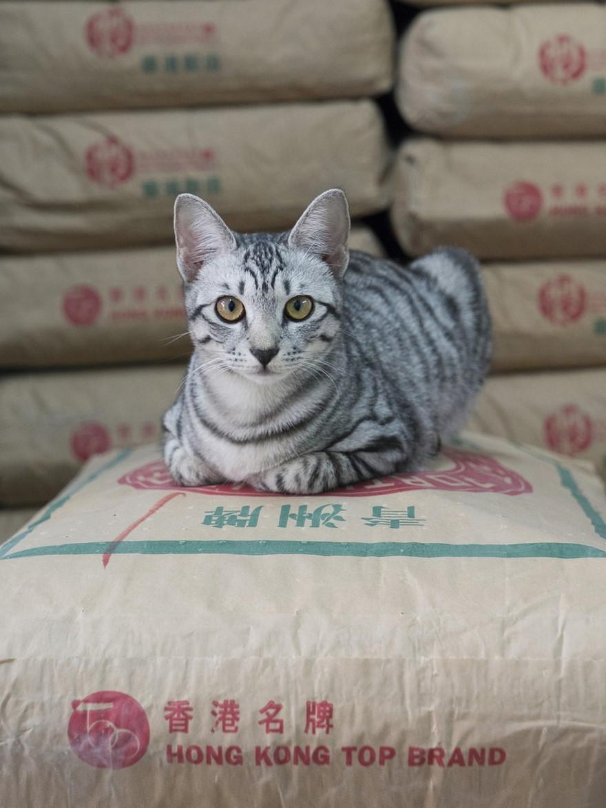 marcel-heijnen-cats-2