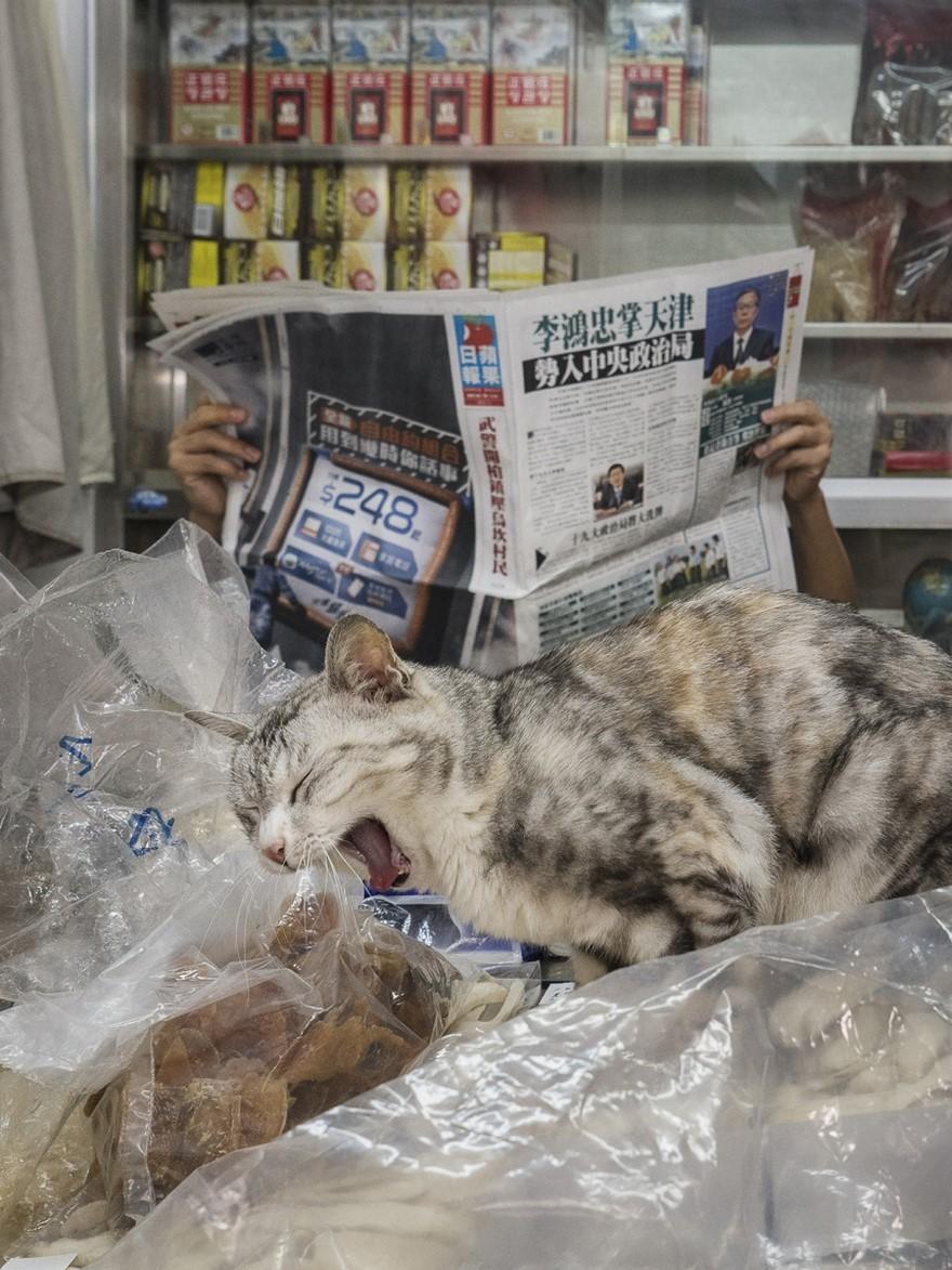 marcel-heijnen-cats-4