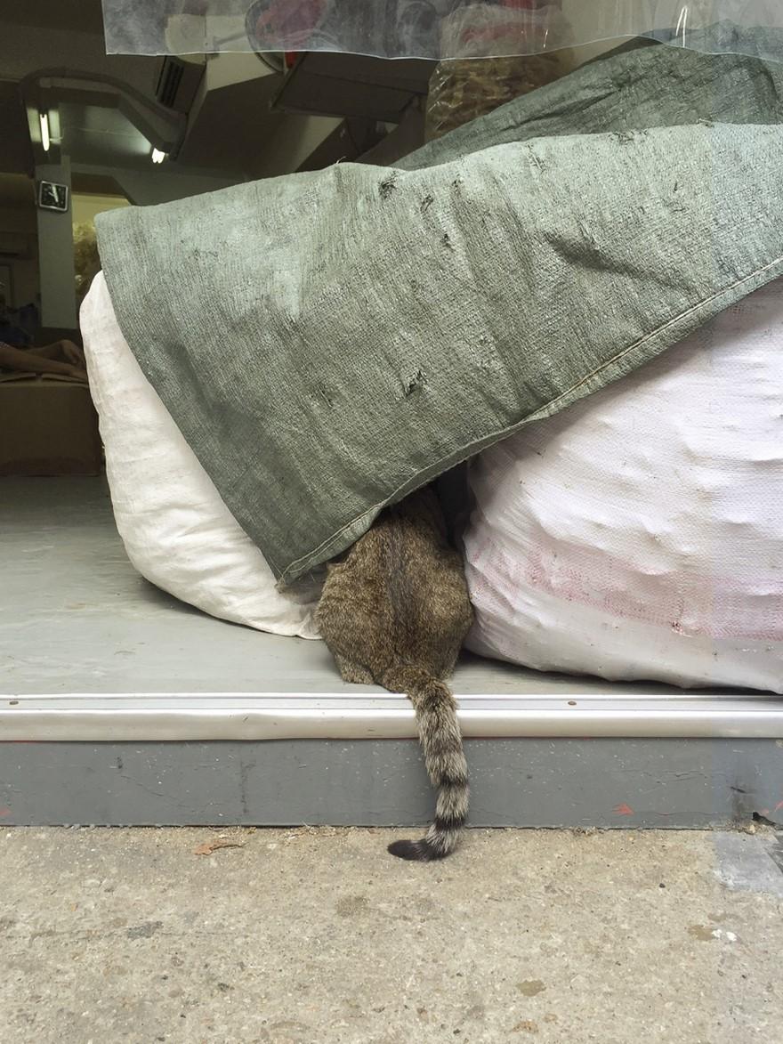 marcel-heijnen-cats-9