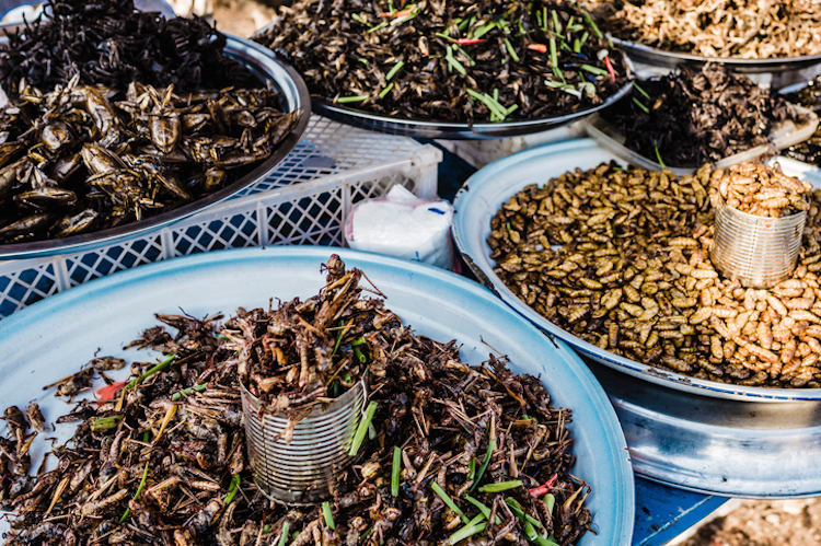 Selling dried insects Siem Reap Cambodia