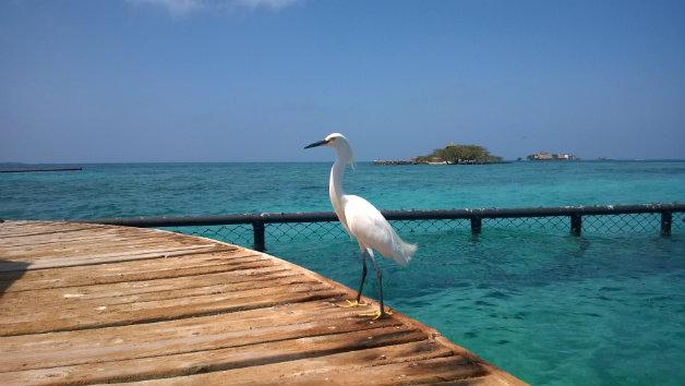 Islas_del_Rosario_-_Cartagena_(8)