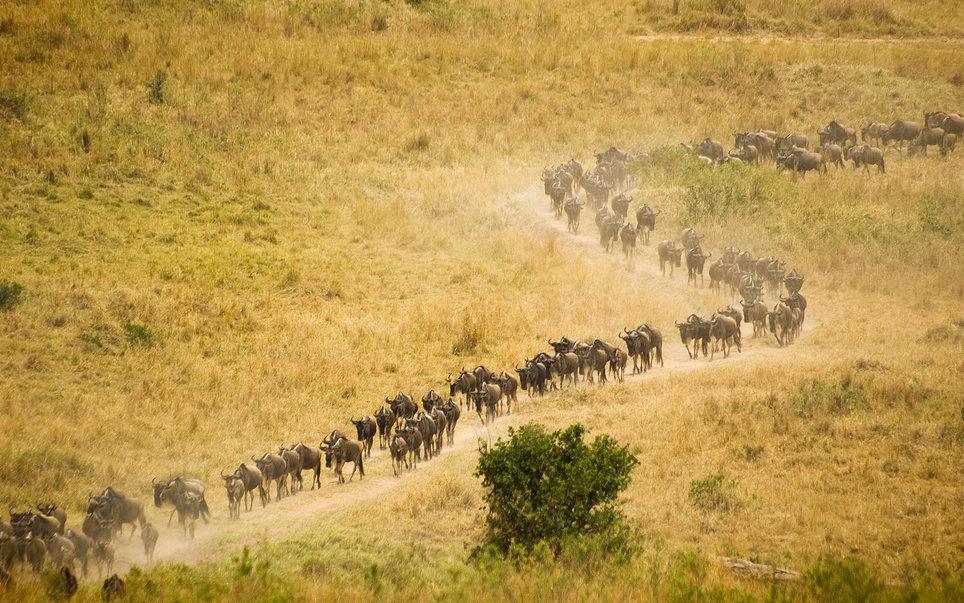 Maasai-Mara-National-Reserve-Kenya-august-travel-BPTM0416