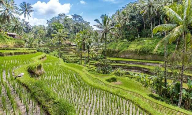 What's The Bali Destination For You? Ubud Guide to Bali