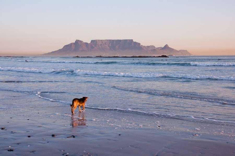 Take your dog for a walk on the beach in cape town