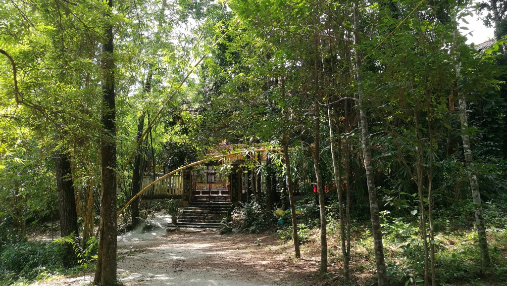 Tall trees and a bamboo arched over the path leading from Tu Hieu monastery to Dieu Tram nunnery in Vietnam's Plum Village