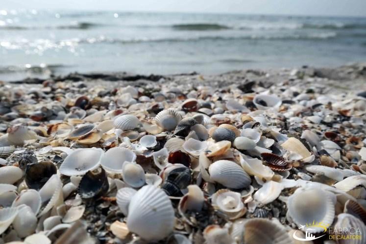 Scoici pe plaja din corbu