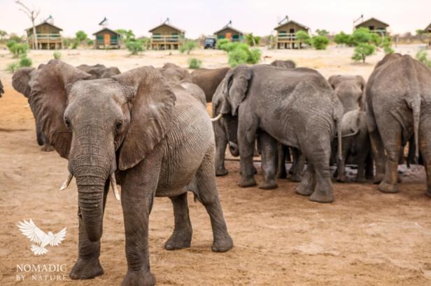 143, Day 248, Elephant Sands, Botswana