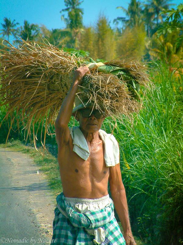 Farmer in Bali's Lowlands