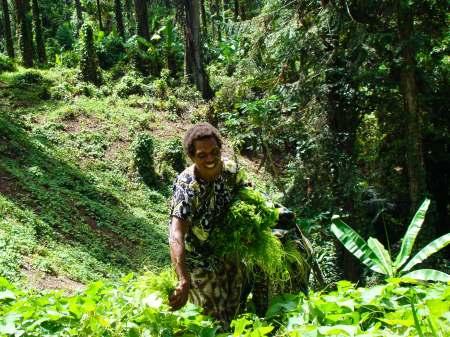 Gathering Greens in Hidden Valley