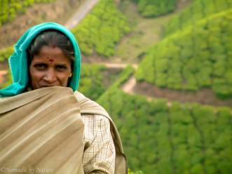 The Black Tea Fields of Munnar, India