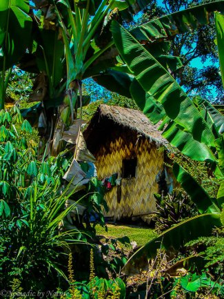 Palm Thatched House in Hidden Valley