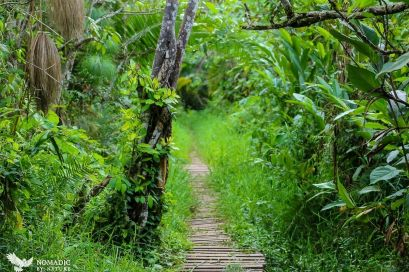 The Wooden Walkways, Bigodi Wetlands, Uganda