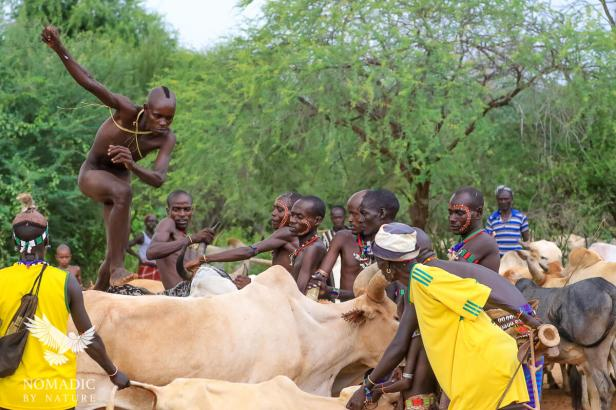 The Boy Becoming a Man by Leaping over Bulls, Ethiopia