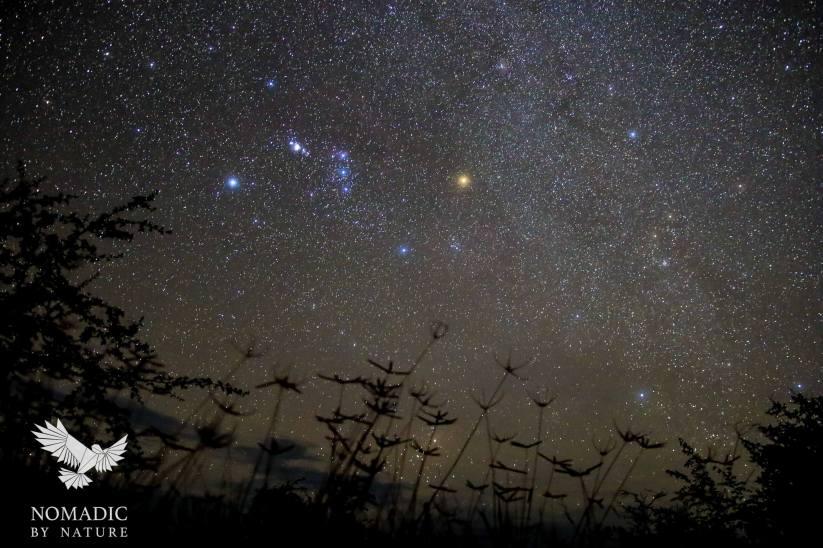 Orion Over Crowfoot Grass, Stargazing on the Kalahari Plains, Botswana