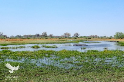 The Slow Flow of the Khwai River in October, Botswana