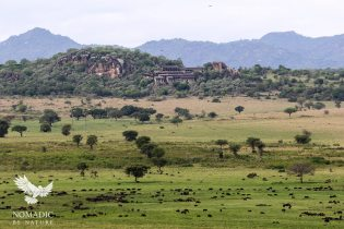 Large Herd in the Narus Valley, Kidepo National Park, Uganda