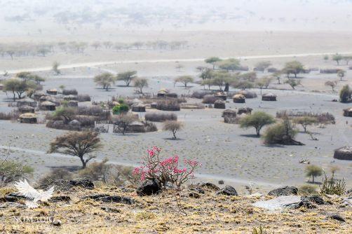 Desert Rose above the Engaresero Maasai Village, Lake Natron Tanzania